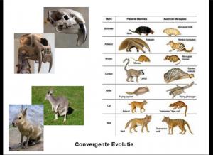 convergentie evolutie